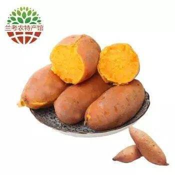 河南省开封市兰考县特产-兰考红薯